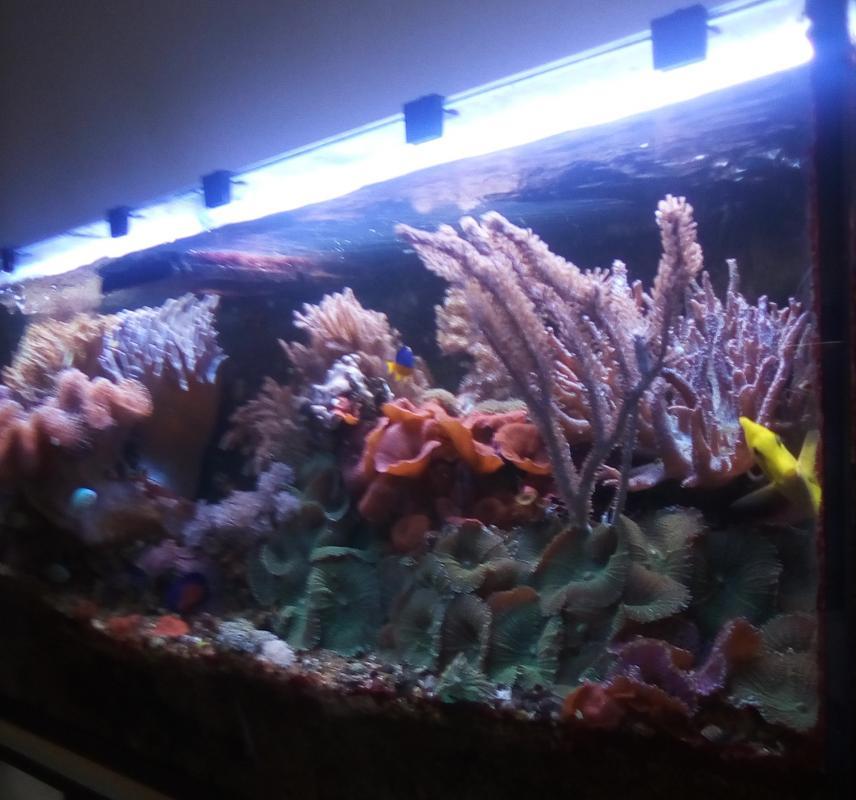 Aquarium bureau 1