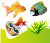 Image aquarium dessin