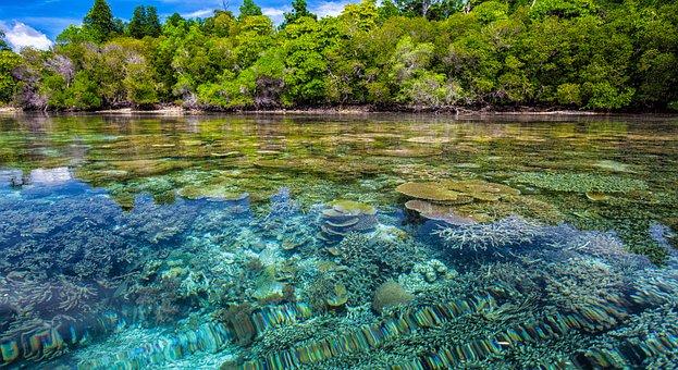 Image mangrove