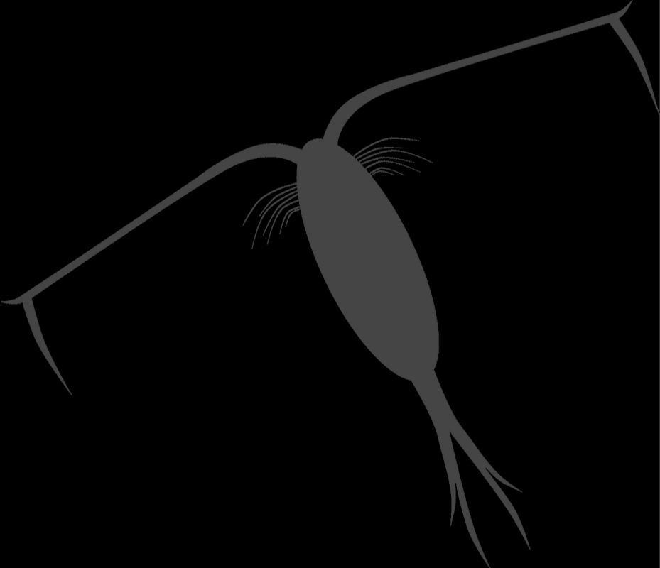 Logo aquamicrifaune